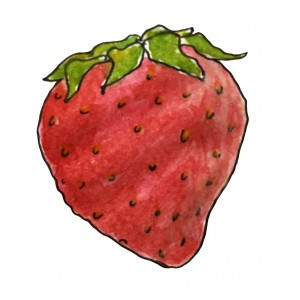 Strawberry illustration_web